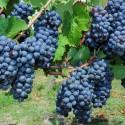 Bouillé St-Paul - Terre de vignobles