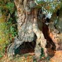 Celles-sur-Belle - Les bois de Celles