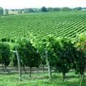Sainte-Verge - Une balade à travers bois et vignes