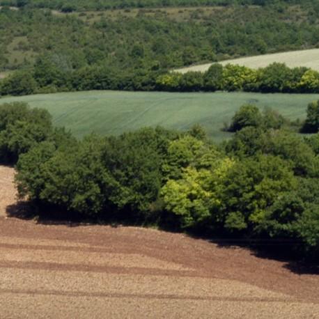 Saint-Georges-de-Noisné - Les vallons de Gâtine