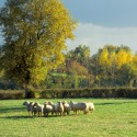 Vasles - La ferme de l'Abbaye