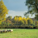 Vasles - Le bois de Fontenalon