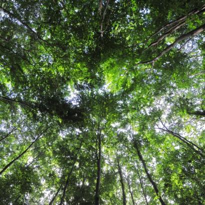 Le Rétail - La forêt domaniale de Secondigny