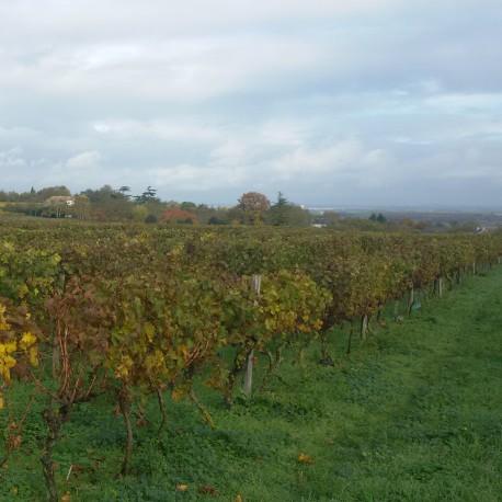 Tourtenay un village troglodyte, haut lieu de la viticulture