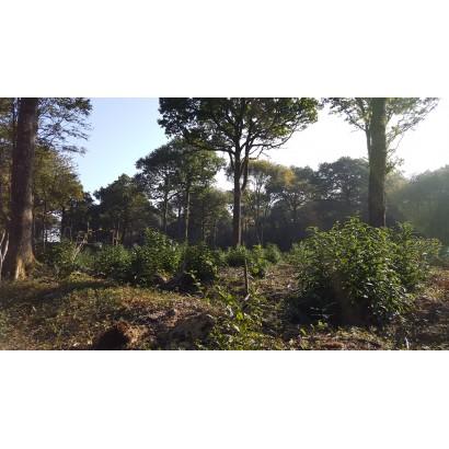 Souvigné - Chevauchée en forêt de l'Hermitain