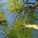 Prissé-La-Charrière - Espace Naturel Sensible Forêt du Grand Bousseau