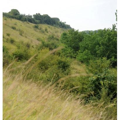 Availles-Thouarsais - Espace Naturel Sensible Vallées sèches d'Availles-Thouarsais