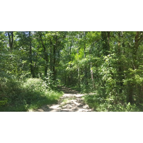 Chizé - 3 itinéraires au départ de la Maison forestière du Bécassy