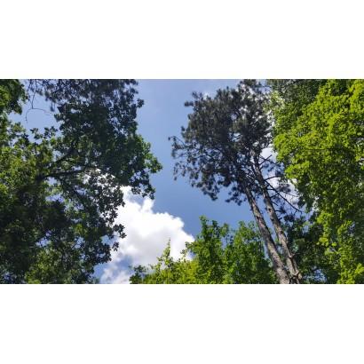 Villiers-en-Bois - 3 itinéraires au départ de Zoodyssée